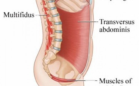 WHY WE NEED TO STOP BLAMING TRANSVERSUS ABDOMINIS FOR BACK PAIN